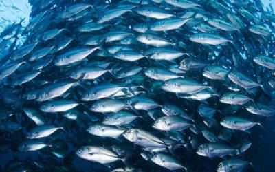 Pescar saúde quando se consome pescado