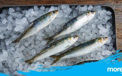 A sardinha é o peixe mais popular das festas e arraiais de Verão!